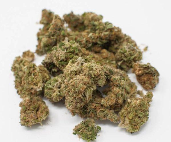 Nasiona marihuany White Label – stabilne, wydajne, mało wymagające